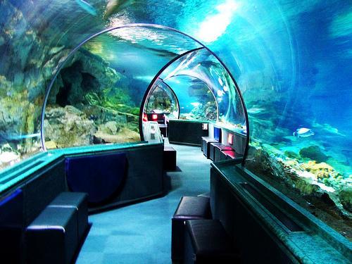 全世界最长的海底隧道